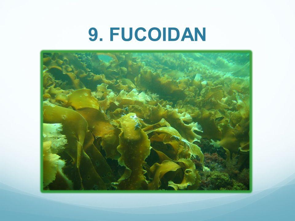 9. FUCOIDAN