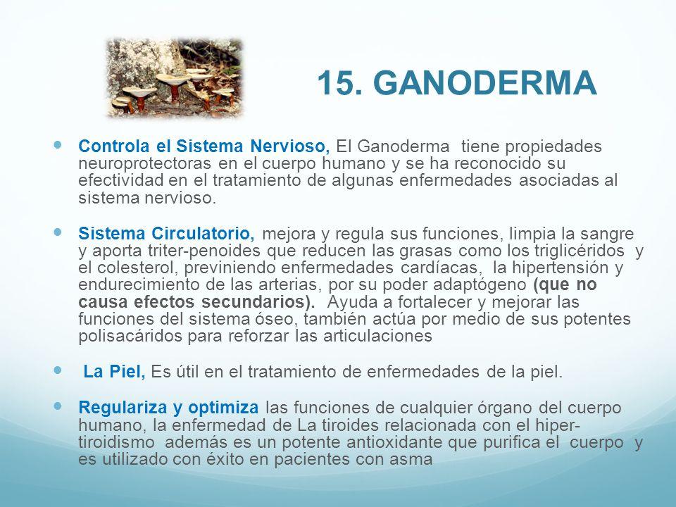 15. Ganoderma