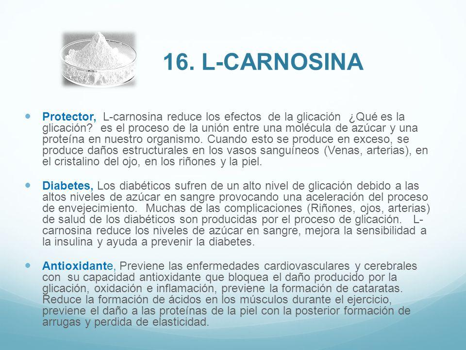 16. L-carnosina