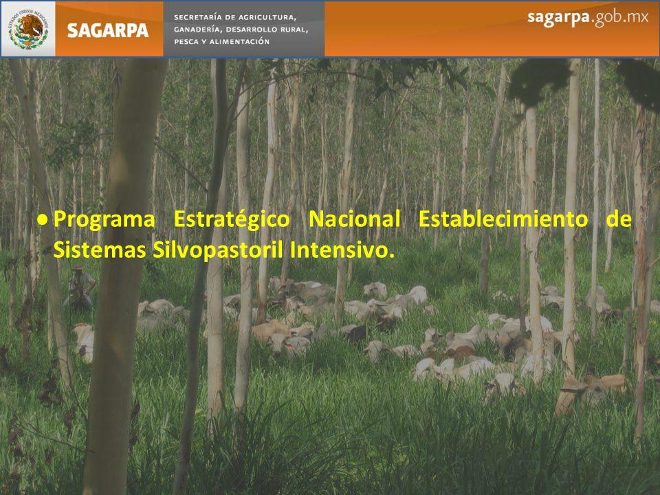 Programa Estratégico Nacional Establecimiento de Sistemas Silvopastoril Intensivo.