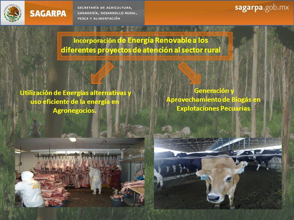 Aprovechamiento de Biogás en Explotaciones Pecuarias