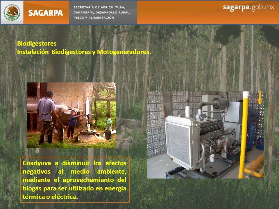 Biodigestores Instalación Biodigestores y Motogeneradores.