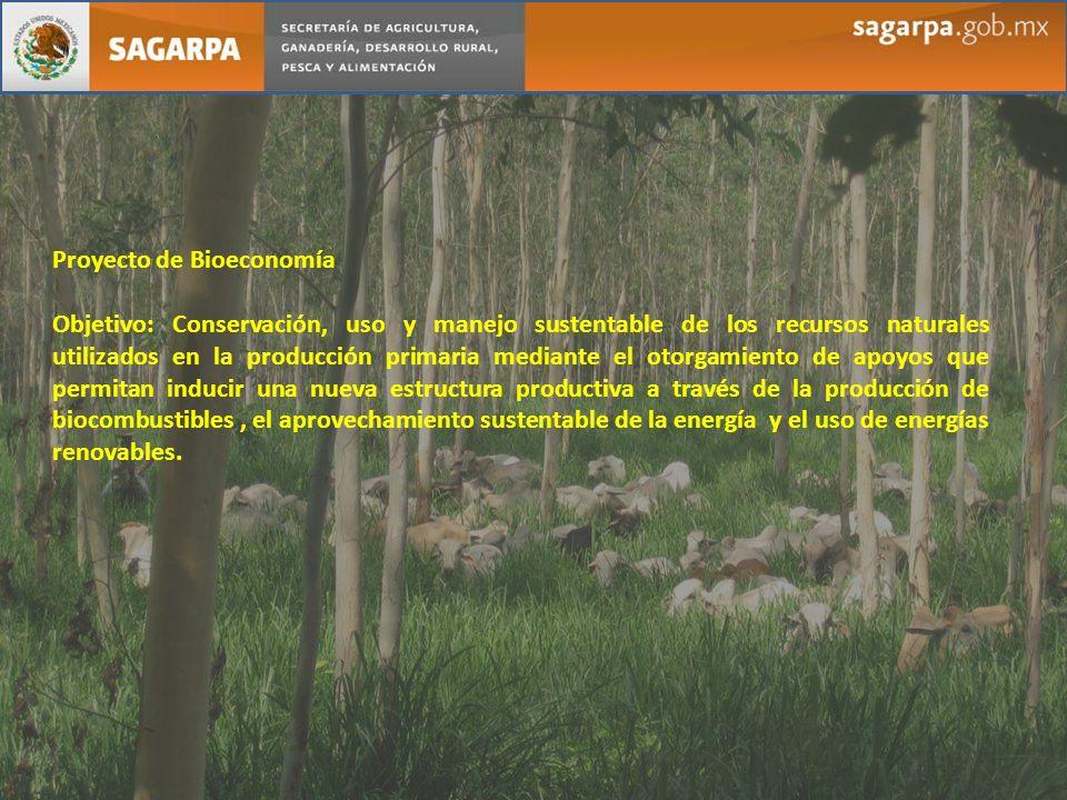 Proyecto de Bioeconomía