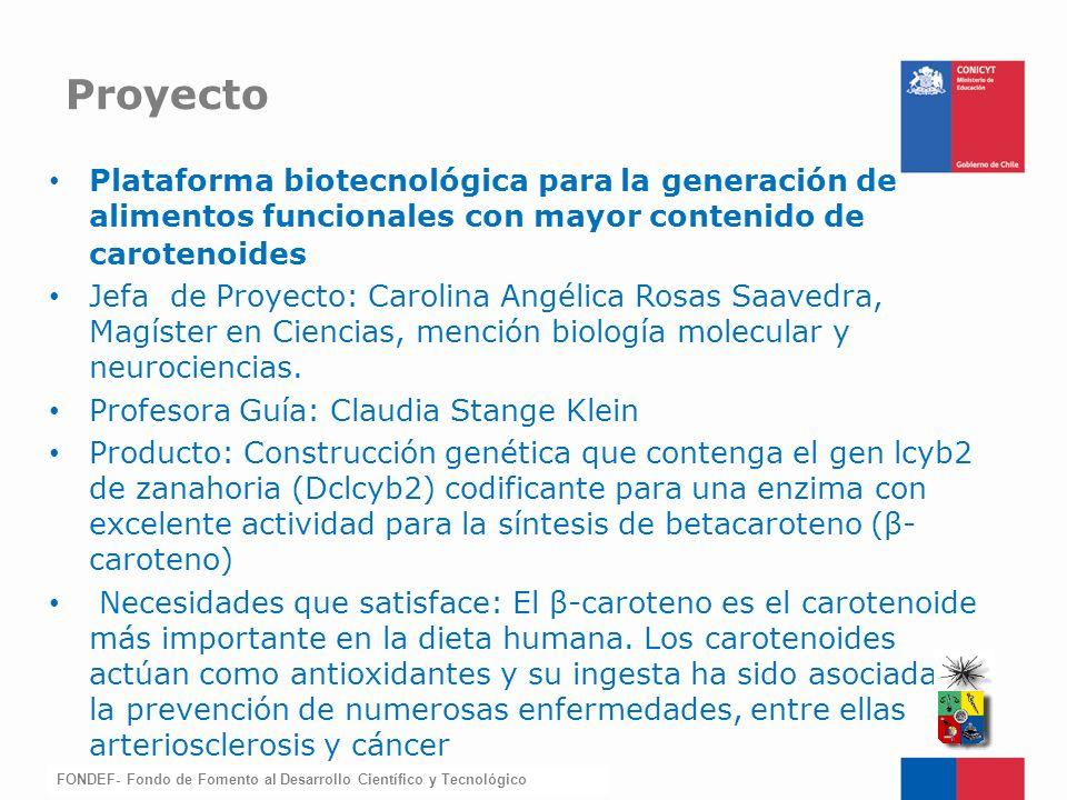 Proyecto Plataforma biotecnológica para la generación de alimentos funcionales con mayor contenido de carotenoides.