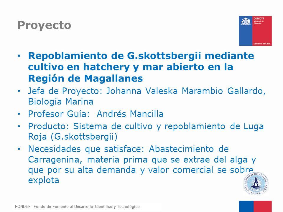 Proyecto Repoblamiento de G.skottsbergii mediante cultivo en hatchery y mar abierto en la Región de Magallanes.