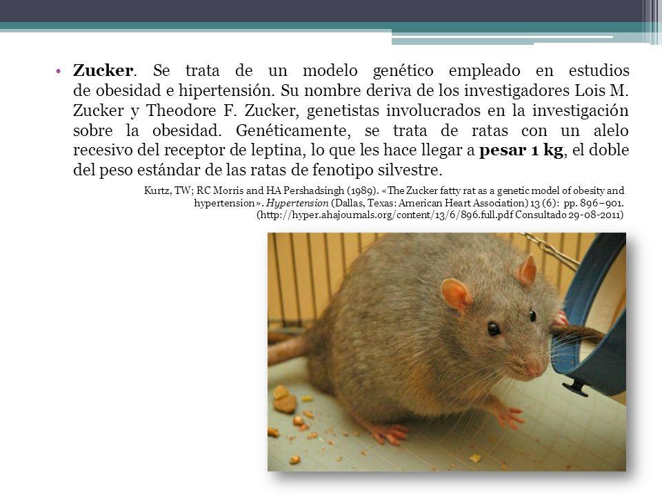 Zucker. Se trata de un modelo genético empleado en estudios de obesidad e hipertensión. Su nombre deriva de los investigadores Lois M. Zucker y Theodore F. Zucker, genetistas involucrados en la investigación sobre la obesidad. Genéticamente, se trata de ratas con un alelo recesivo del receptor de leptina, lo que les hace llegar a pesar 1 kg, el doble del peso estándar de las ratas de fenotipo silvestre.