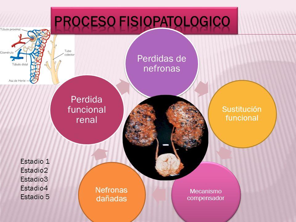 Proceso fisiopatologico