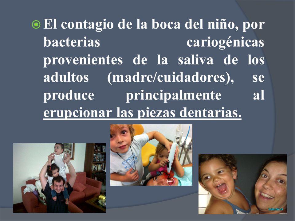 El contagio de la boca del niño, por bacterias cariogénicas provenientes de la saliva de los adultos (madre/cuidadores), se produce principalmente al erupcionar las piezas dentarias.
