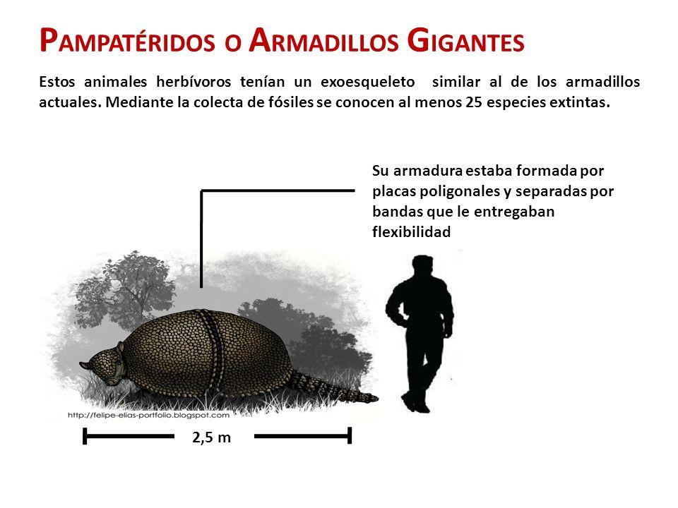 PAMPATÉRIDOS O ARMADILLOS GIGANTES
