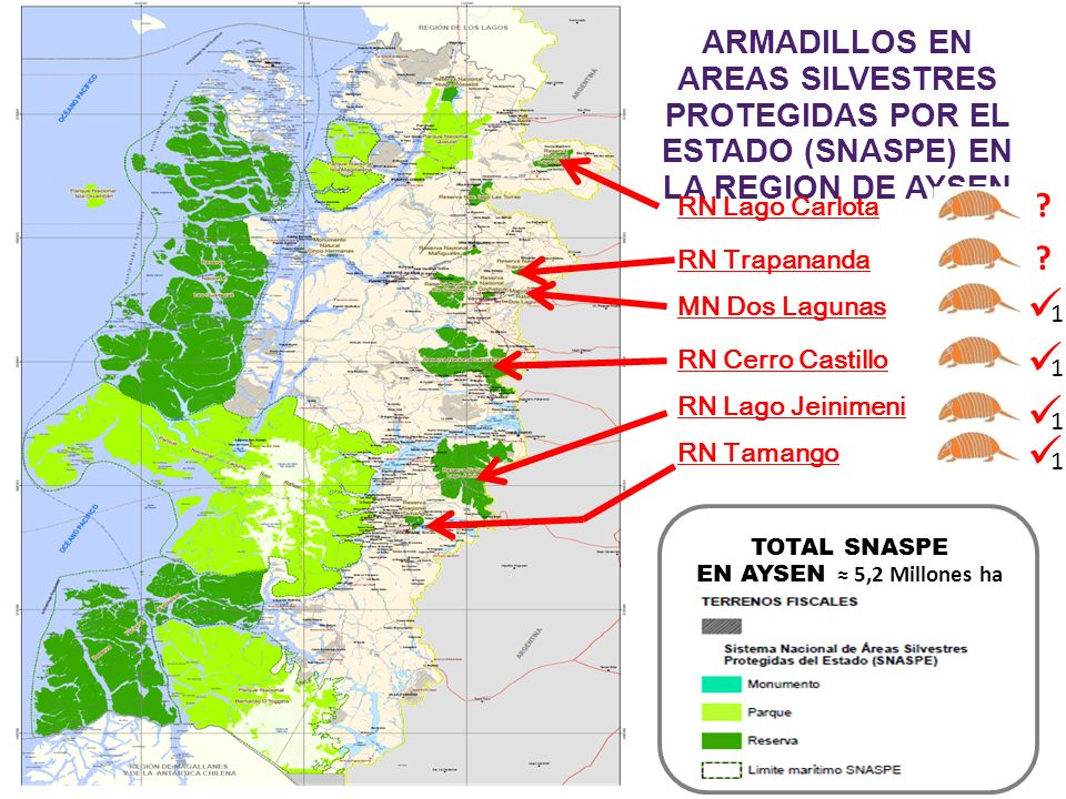 ARMADILLOS EN AREAS SILVESTRES PROTEGIDAS POR EL ESTADO (SNASPE) EN LA REGION DE AYSEN