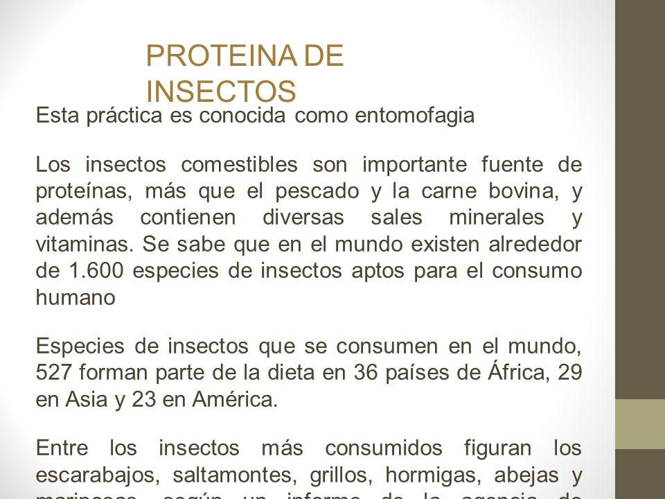PROTEINA DE INSECTOS Esta práctica es conocida como entomofagia
