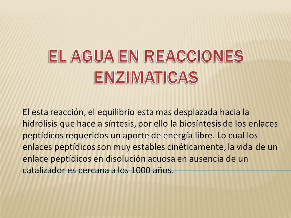 EL AGUA EN REACCIONES ENZIMATICAS