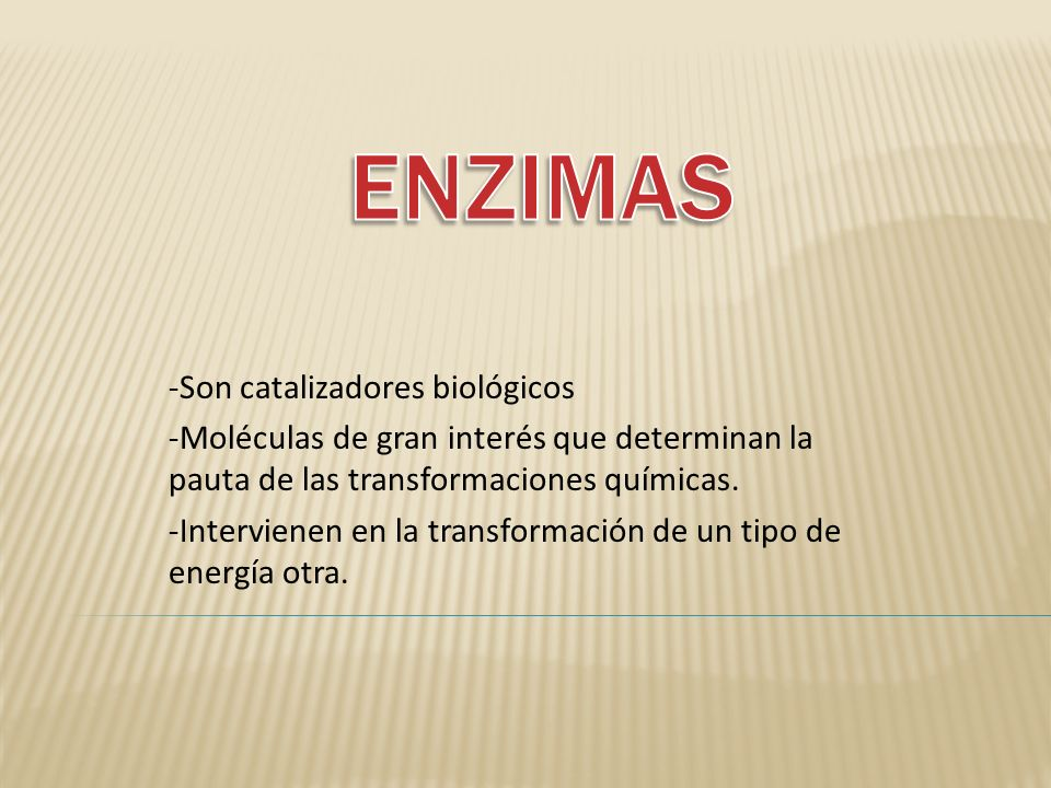 ENZIMAS -Son catalizadores biológicos