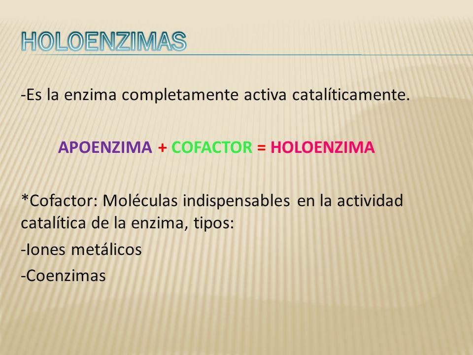HOLOENZIMAS -Es la enzima completamente activa catalíticamente.
