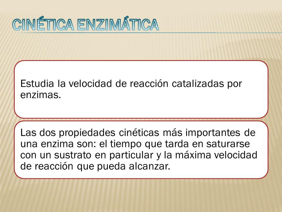 CINÉTICA ENZIMÁTICA Estudia la velocidad de reacción catalizadas por enzimas.