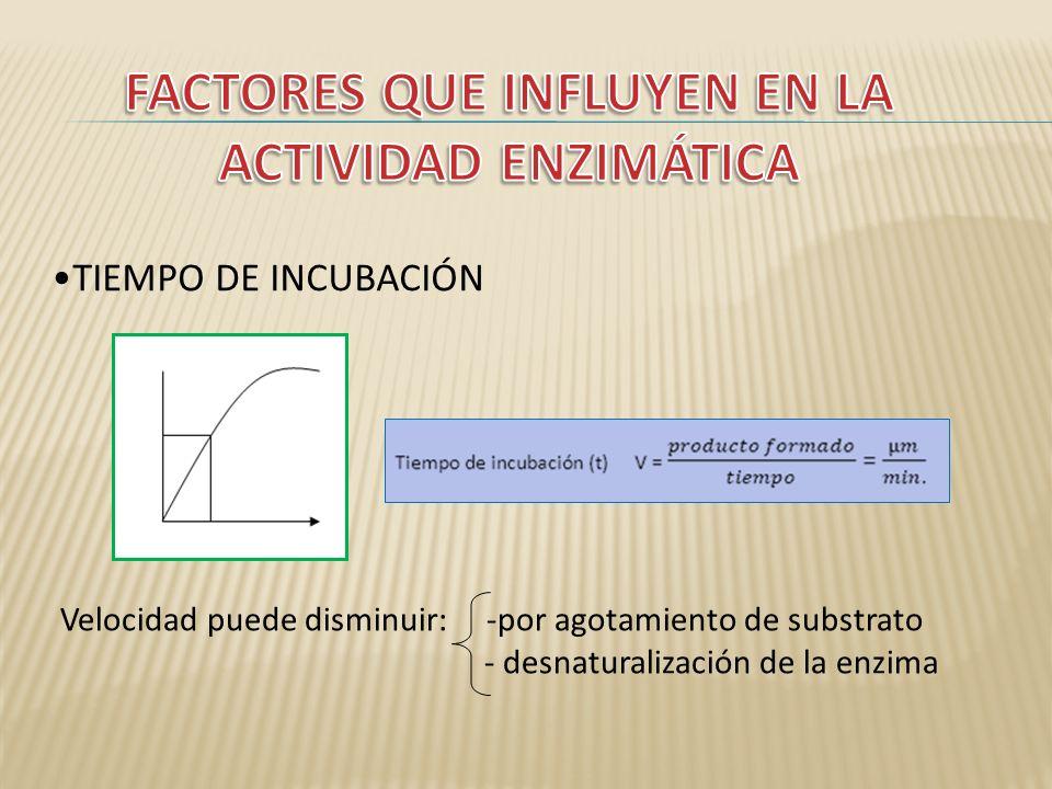 FACTORES QUE INFLUYEN EN LA ACTIVIDAD ENZIMÁTICA