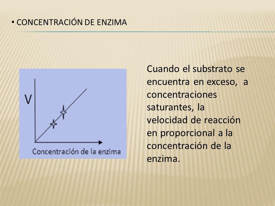 CONCENTRACIÓN DE ENZIMA