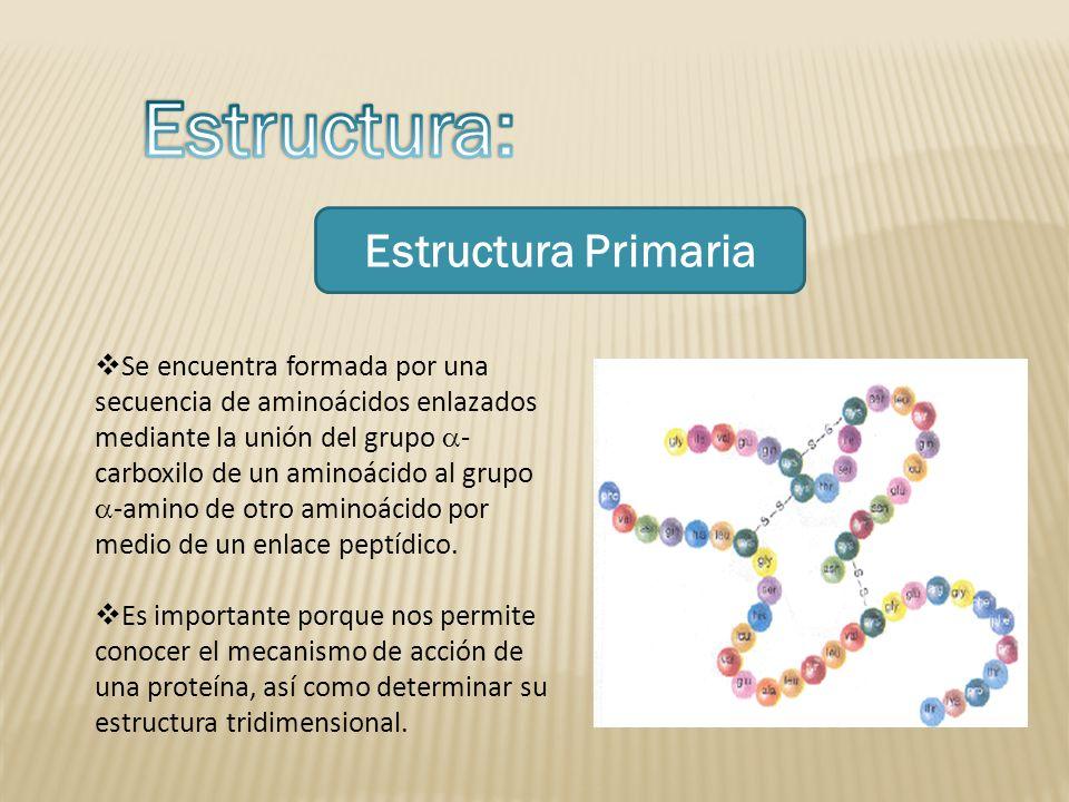 Estructura: Estructura Primaria