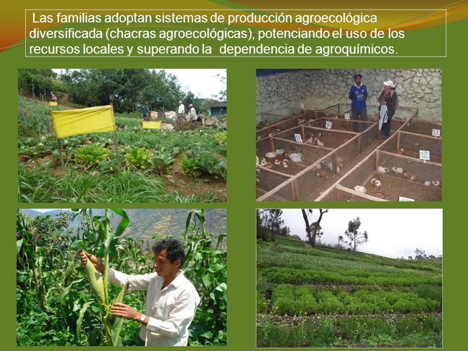 Las familias adoptan sistemas de producción agroecológica diversificada (chacras agroecológicas), potenciando el uso de los recursos locales y superando la dependencia de agroquímicos.