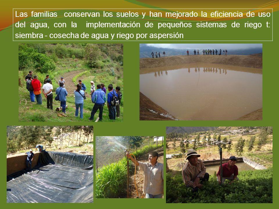 Las familias conservan los suelos y han mejorado la eficiencia de uso del agua, con la implementación de pequeños sistemas de riego t: siembra - cosecha de agua y riego por aspersión
