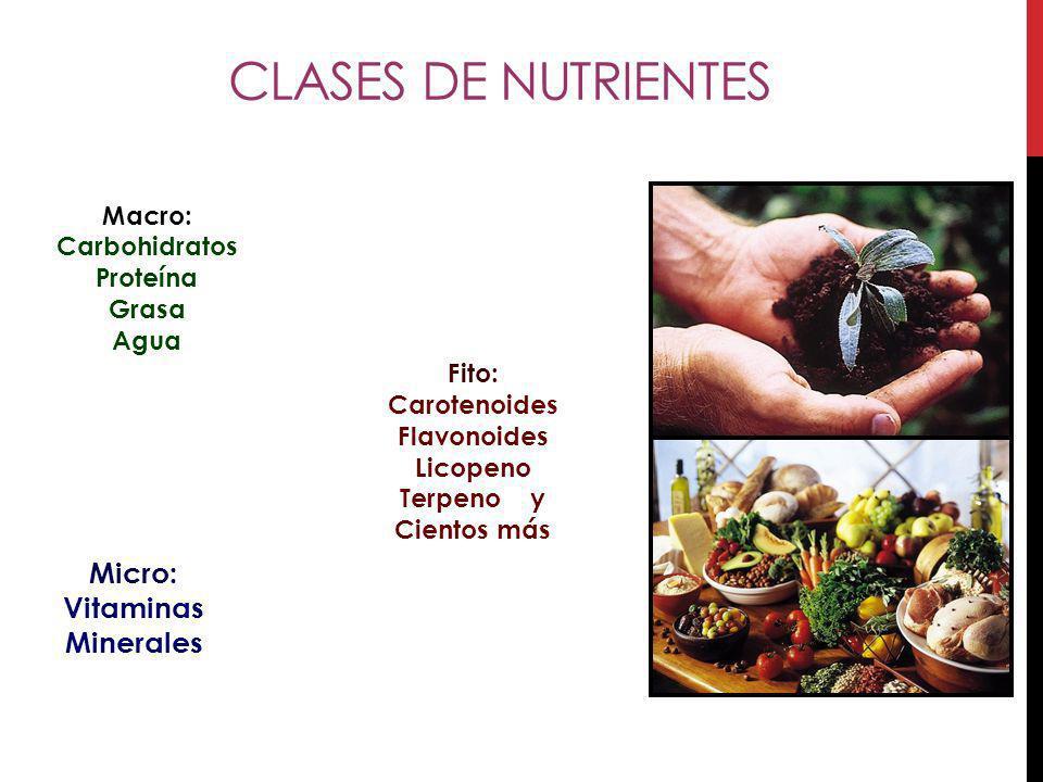 Clases de Nutrientes Micro: Vitaminas Minerales Macro: Carbohidratos