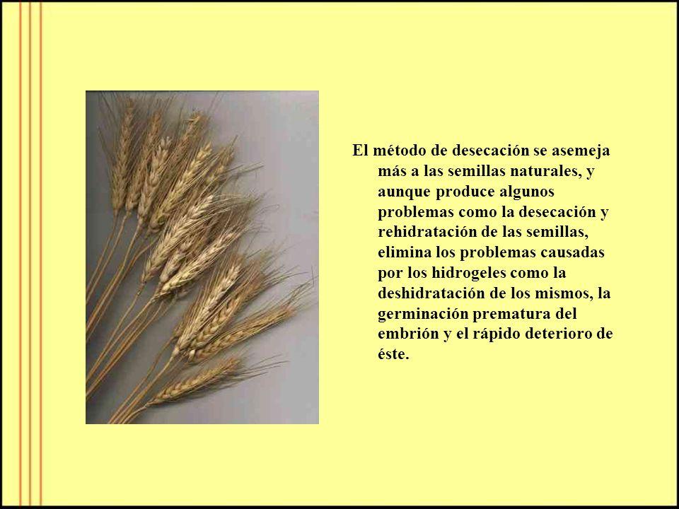 El método de desecación se asemeja más a las semillas naturales, y aunque produce algunos problemas como la desecación y rehidratación de las semillas, elimina los problemas causadas por los hidrogeles como la deshidratación de los mismos, la germinación prematura del embrión y el rápido deterioro de éste.