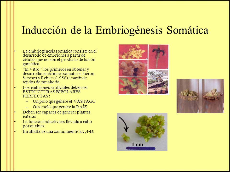 Inducción de la Embriogénesis Somática