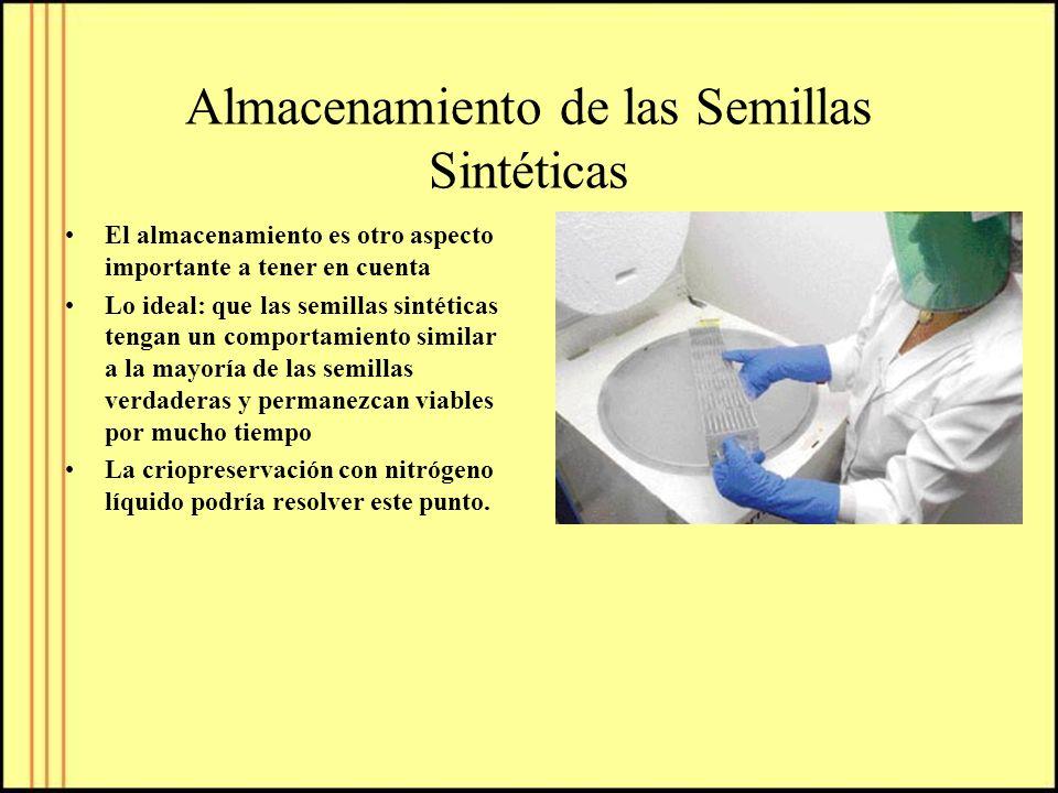 Almacenamiento de las Semillas Sintéticas