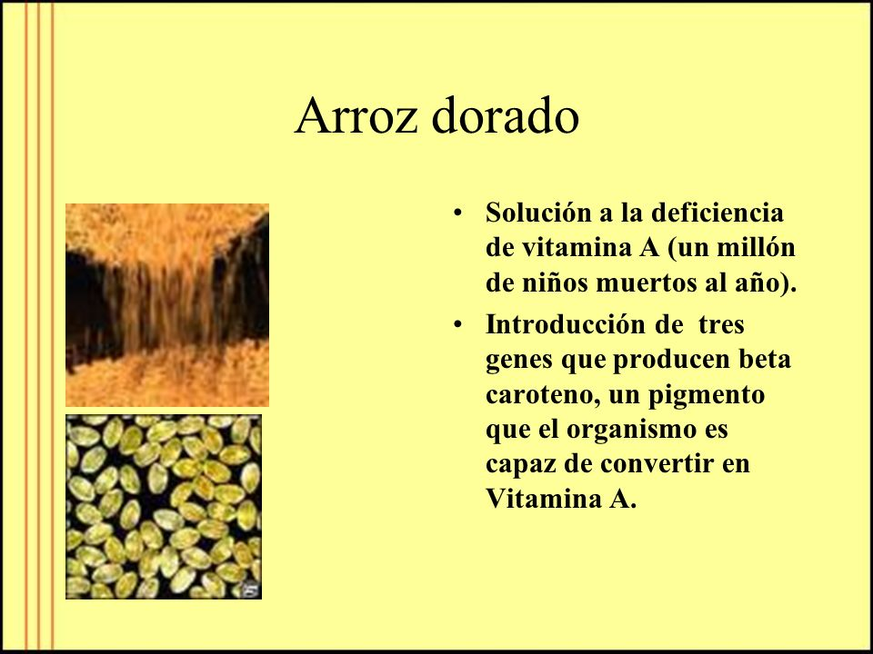 Arroz dorado Solución a la deficiencia de vitamina A (un millón de niños muertos al año).