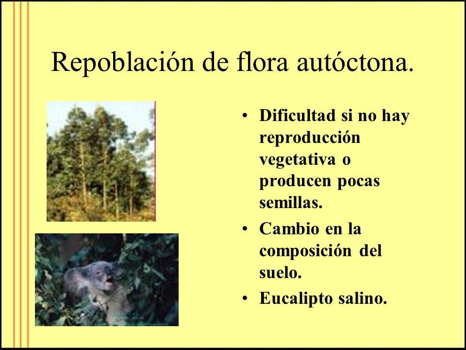 Repoblación de flora autóctona.