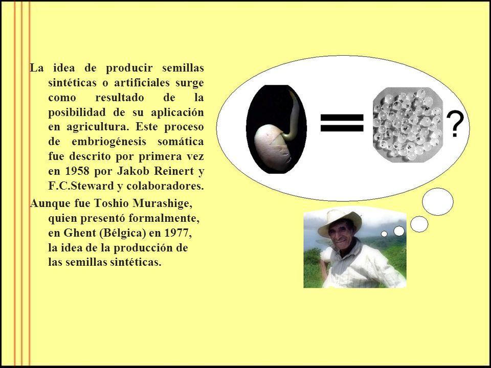 La idea de producir semillas sintéticas o artificiales surge como resultado de la posibilidad de su aplicación en agricultura. Este proceso de embriogénesis somática fue descrito por primera vez en 1958 por Jakob Reinert y F.C.Steward y colaboradores.