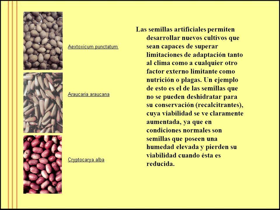 Las semillas artificiales permiten desarrollar nuevos cultivos que sean capaces de superar limitaciones de adaptación tanto al clima como a cualquier otro factor externo limitante como nutrición o plagas.
