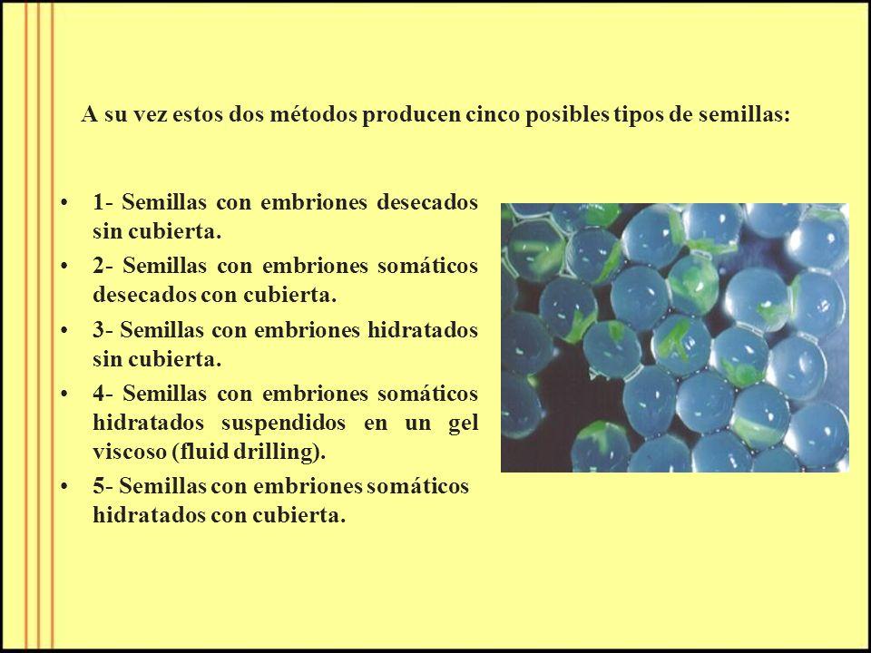 A su vez estos dos métodos producen cinco posibles tipos de semillas: