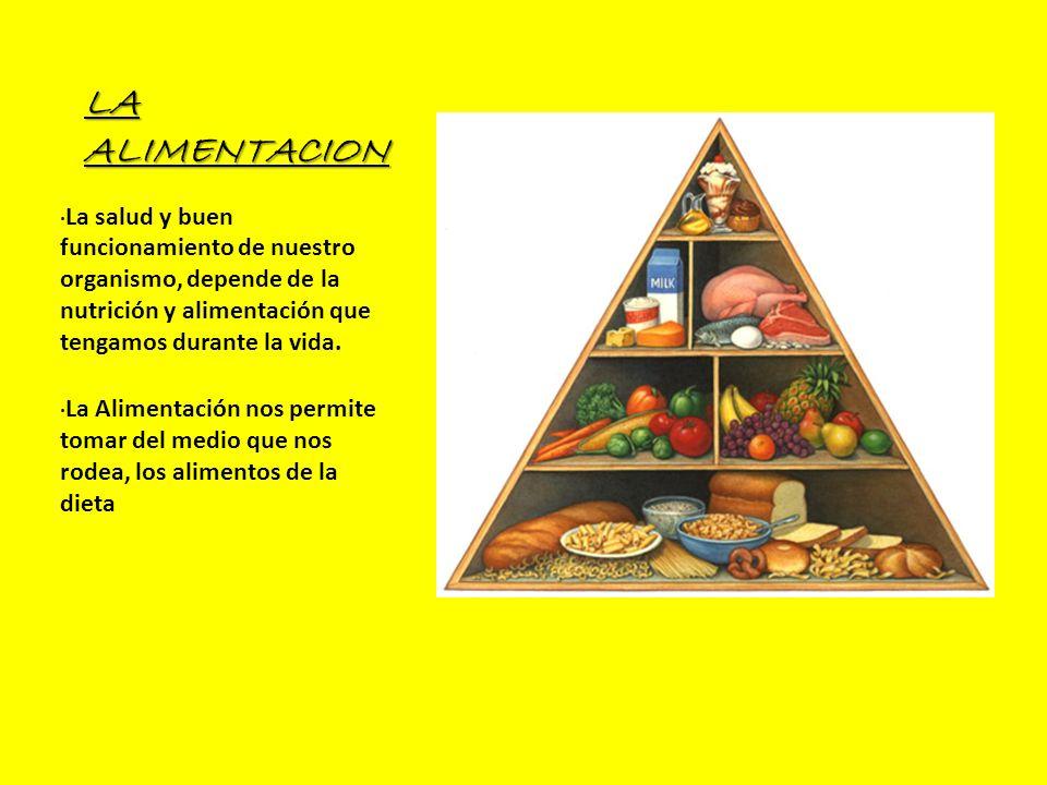 LA ALIMENTACION ·La salud y buen funcionamiento de nuestro organismo, depende de la nutrición y alimentación que tengamos durante la vida.