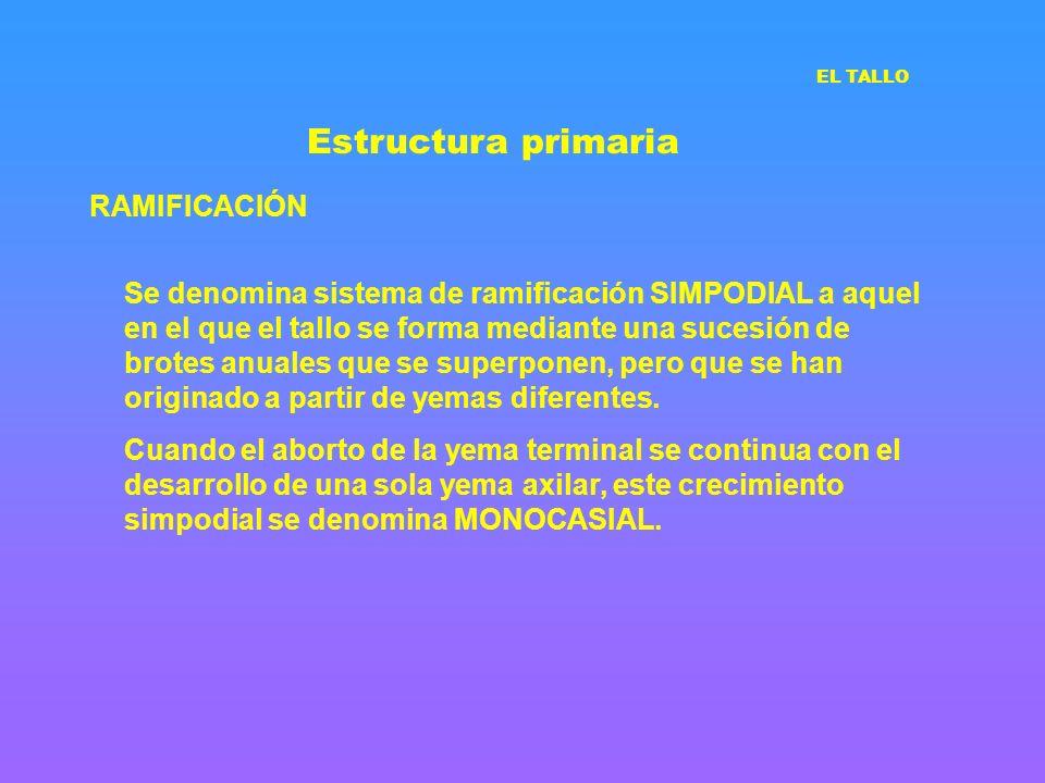Estructura primaria RAMIFICACIÓN