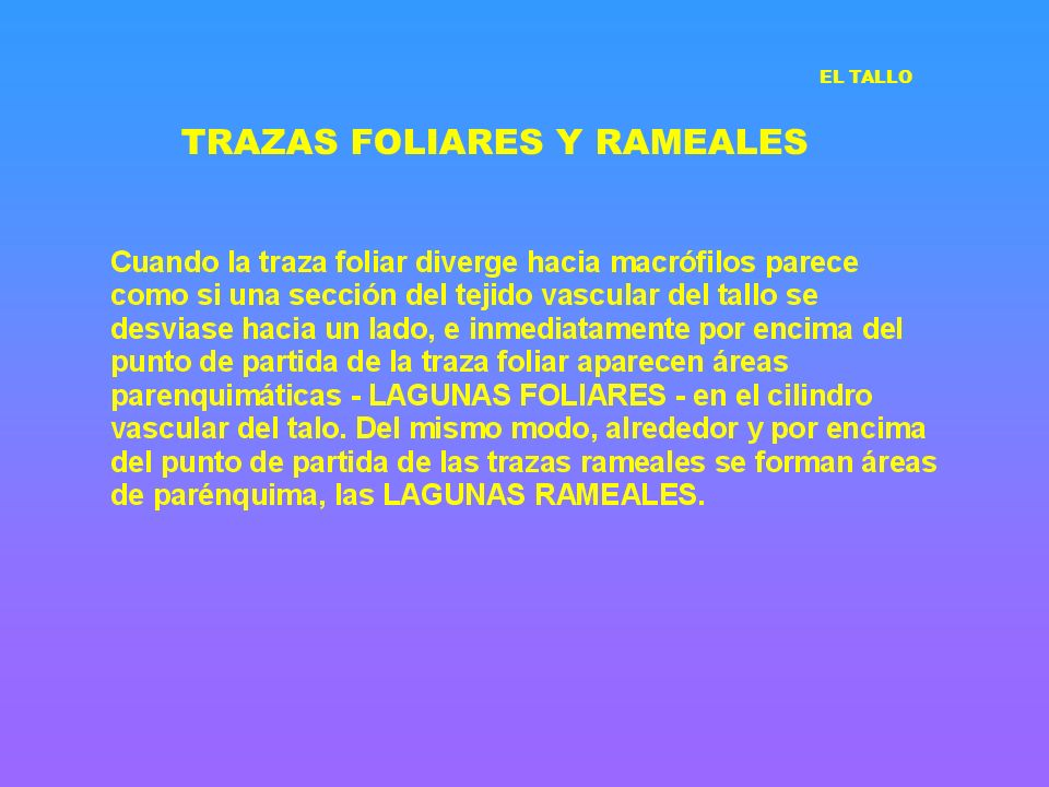 TRAZAS FOLIARES Y RAMEALES