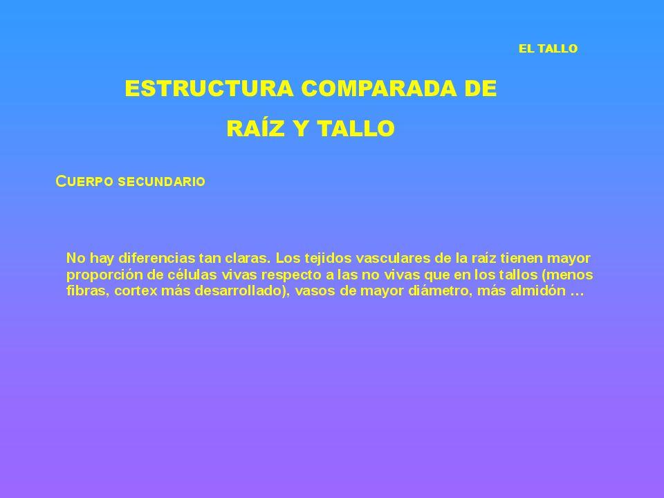 ESTRUCTURA COMPARADA DE