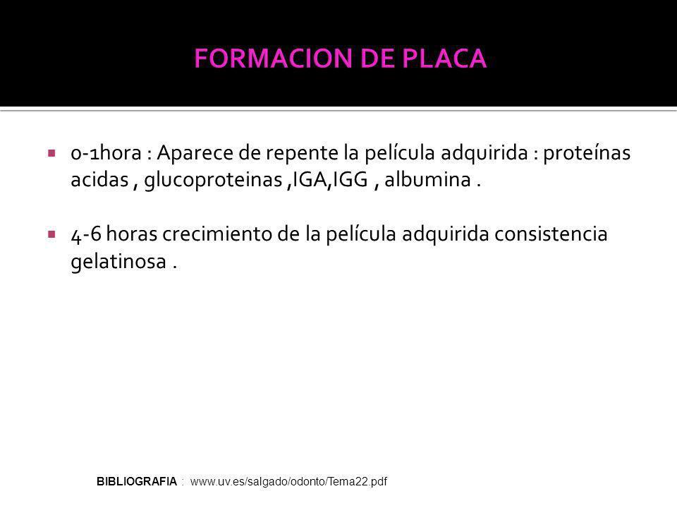 FORMACION DE PLACA 0-1hora : Aparece de repente la película adquirida : proteínas acidas , glucoproteinas ,IGA,IGG , albumina .