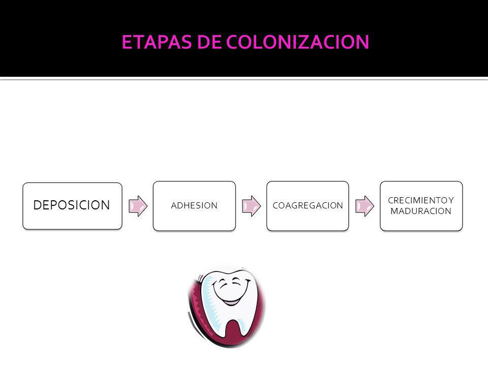 ETAPAS DE COLONIZACION