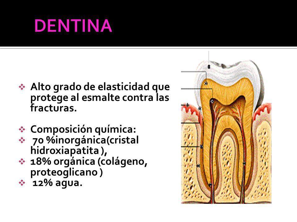 DENTINA Alto grado de elasticidad que protege al esmalte contra las fracturas. Composición química: