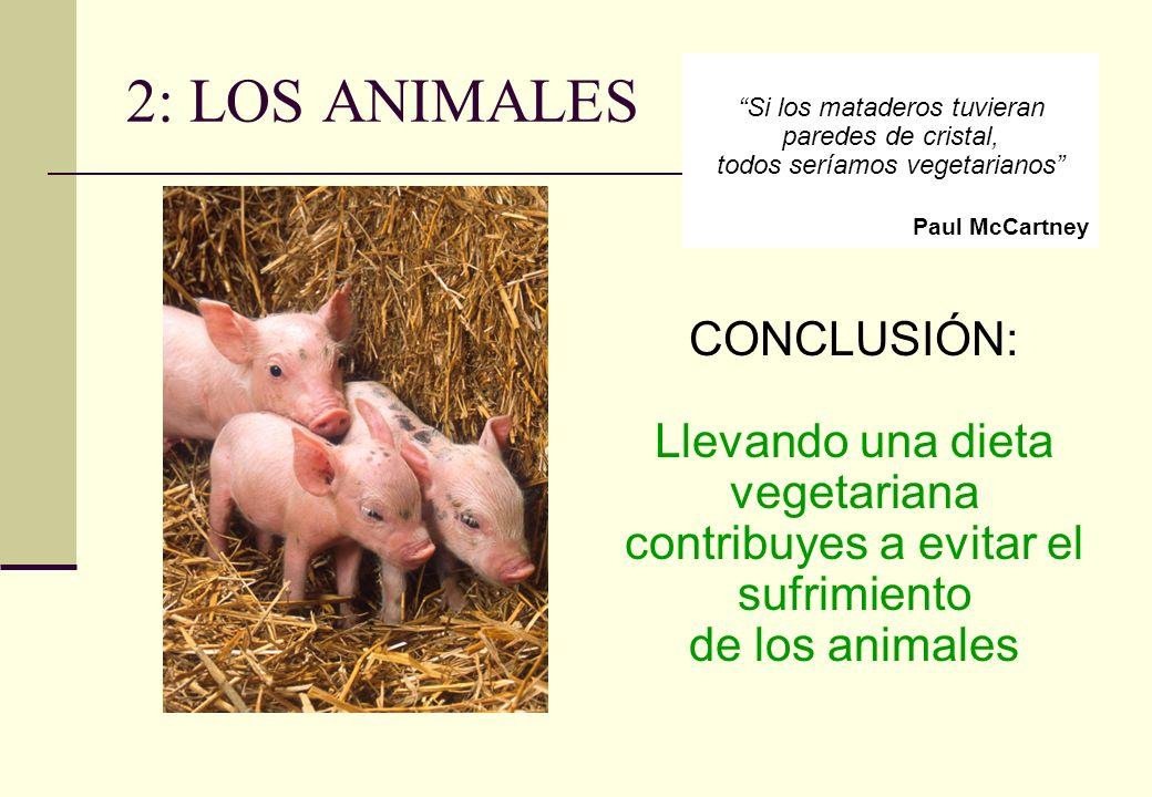 2: LOS ANIMALES CONCLUSIÓN: