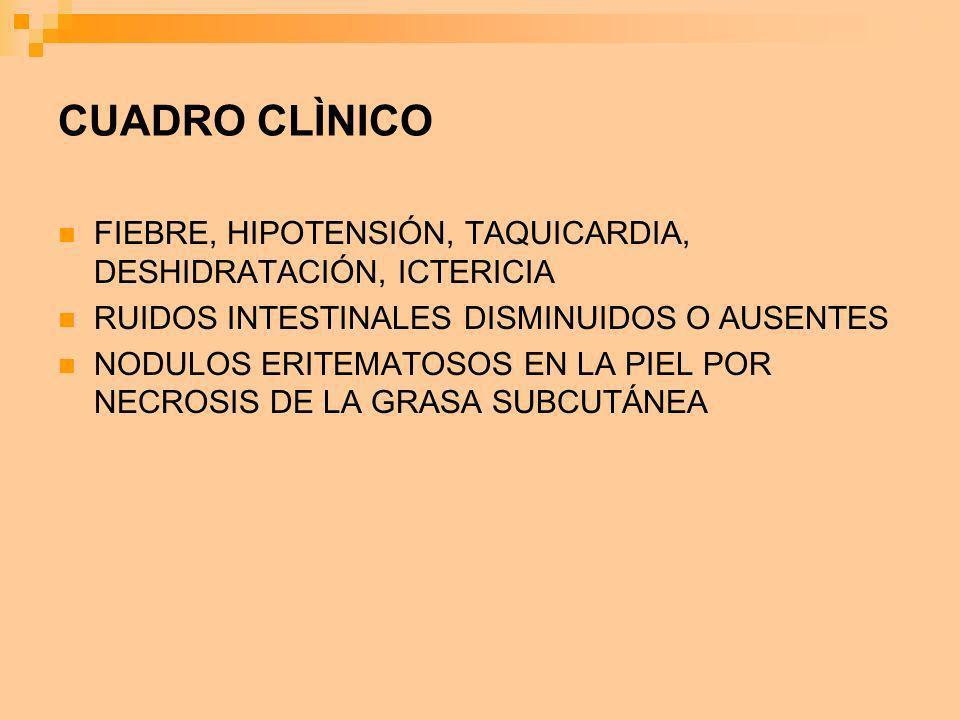 CUADRO CLÌNICO FIEBRE, HIPOTENSIÓN, TAQUICARDIA, DESHIDRATACIÓN, ICTERICIA. RUIDOS INTESTINALES DISMINUIDOS O AUSENTES.