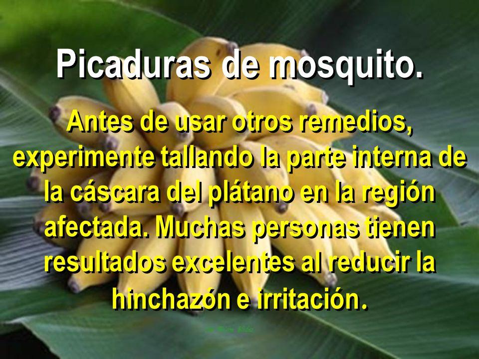 Picaduras de mosquito.