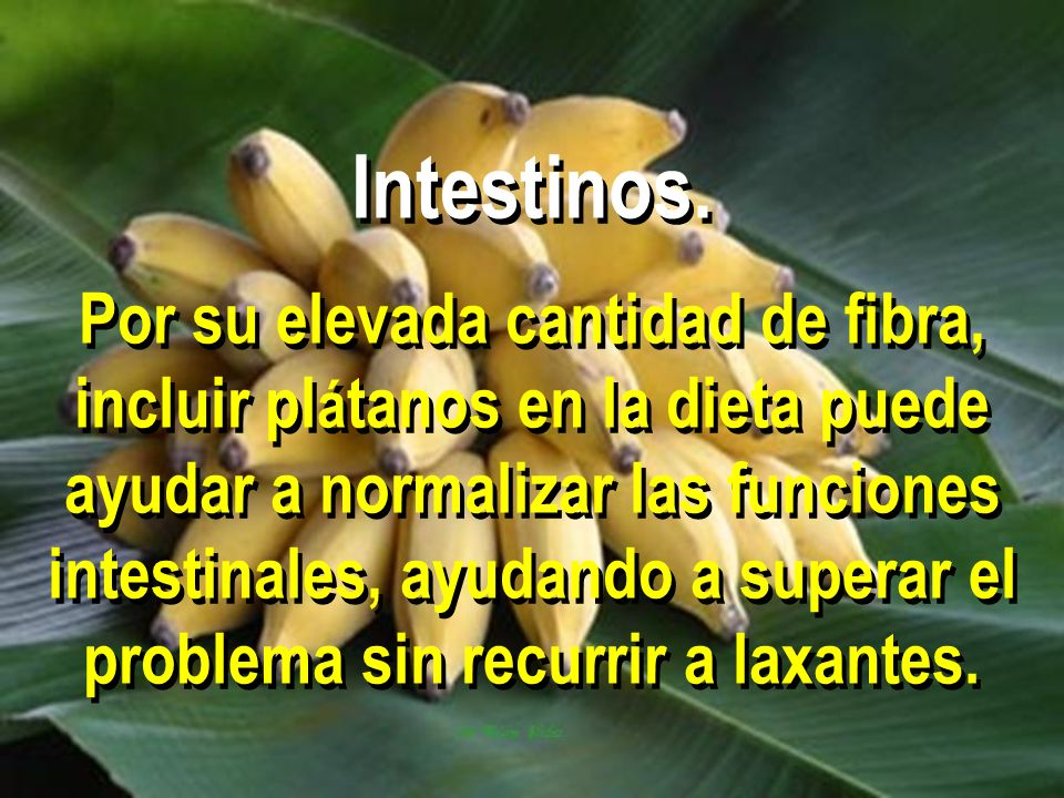Intestinos.