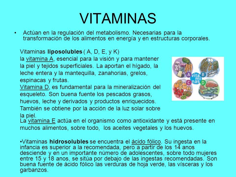 VITAMINAS Actúan en la regulación del metabolismo. Necesarias para la transformación de los alimentos en energía y en estructuras corporales.