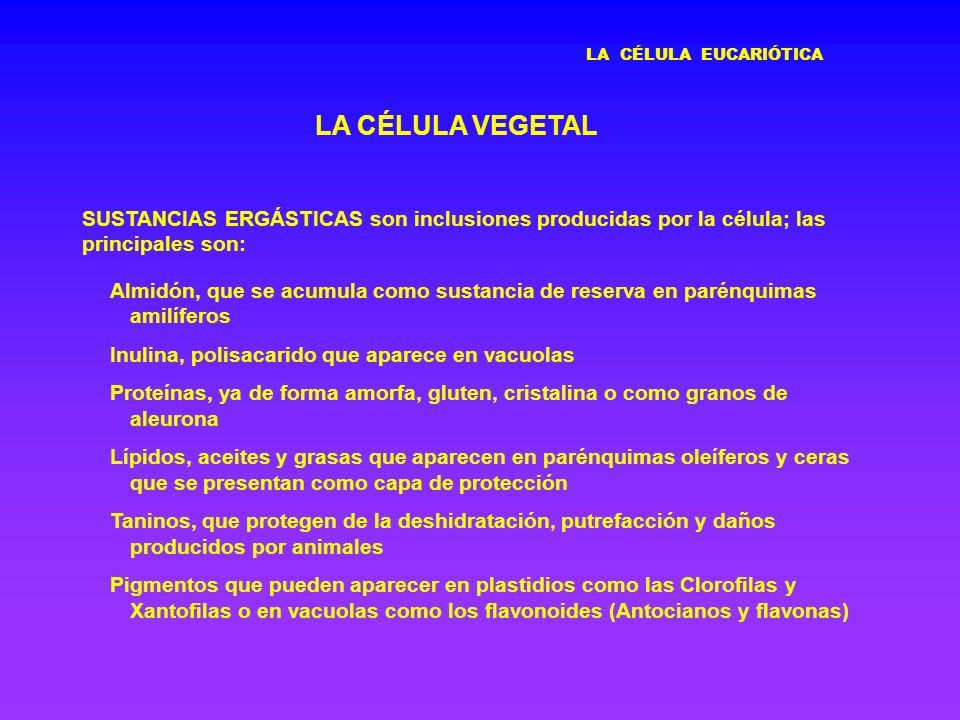 LA CÉLULA EUCARIÓTICA LA CÉLULA VEGETAL. SUSTANCIAS ERGÁSTICAS son inclusiones producidas por la célula; las principales son: