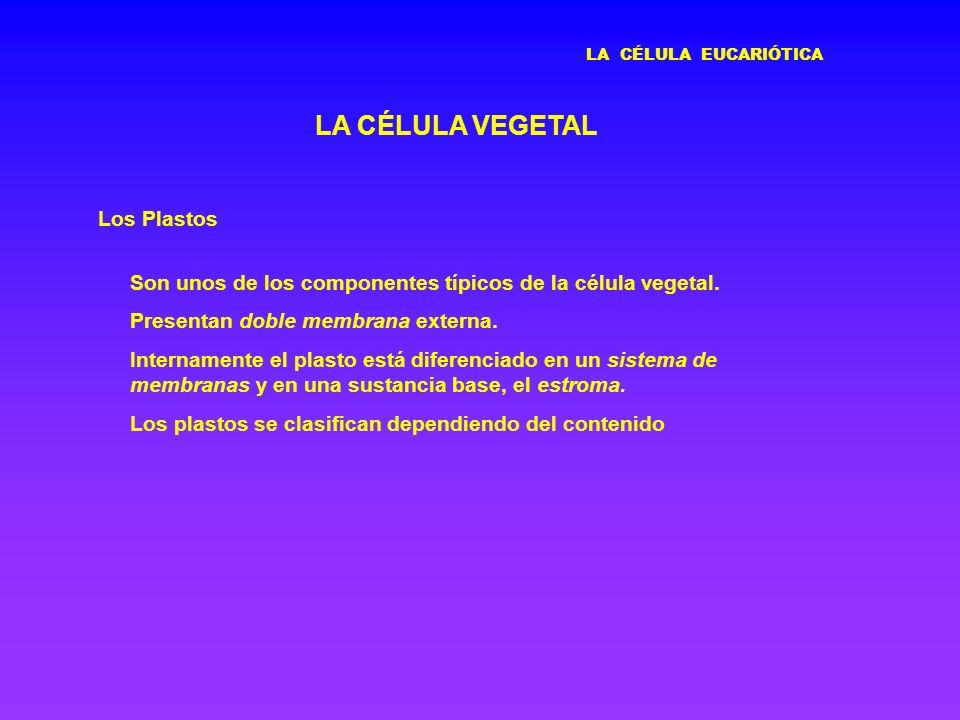 LA CÉLULA VEGETAL Los Plastos