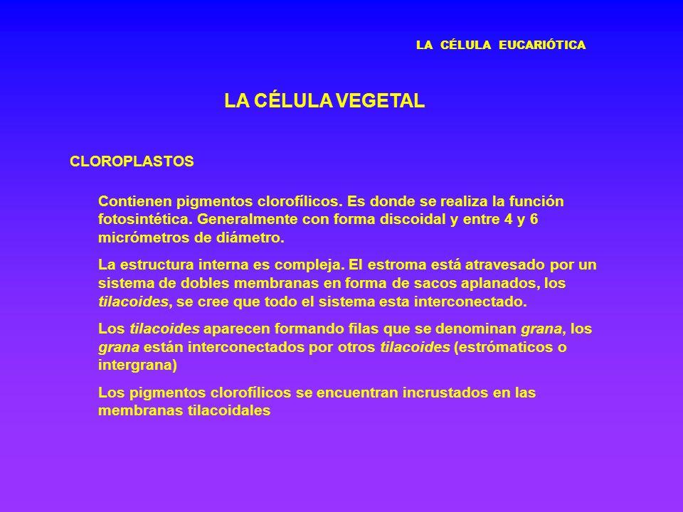 LA CÉLULA VEGETAL CLOROPLASTOS