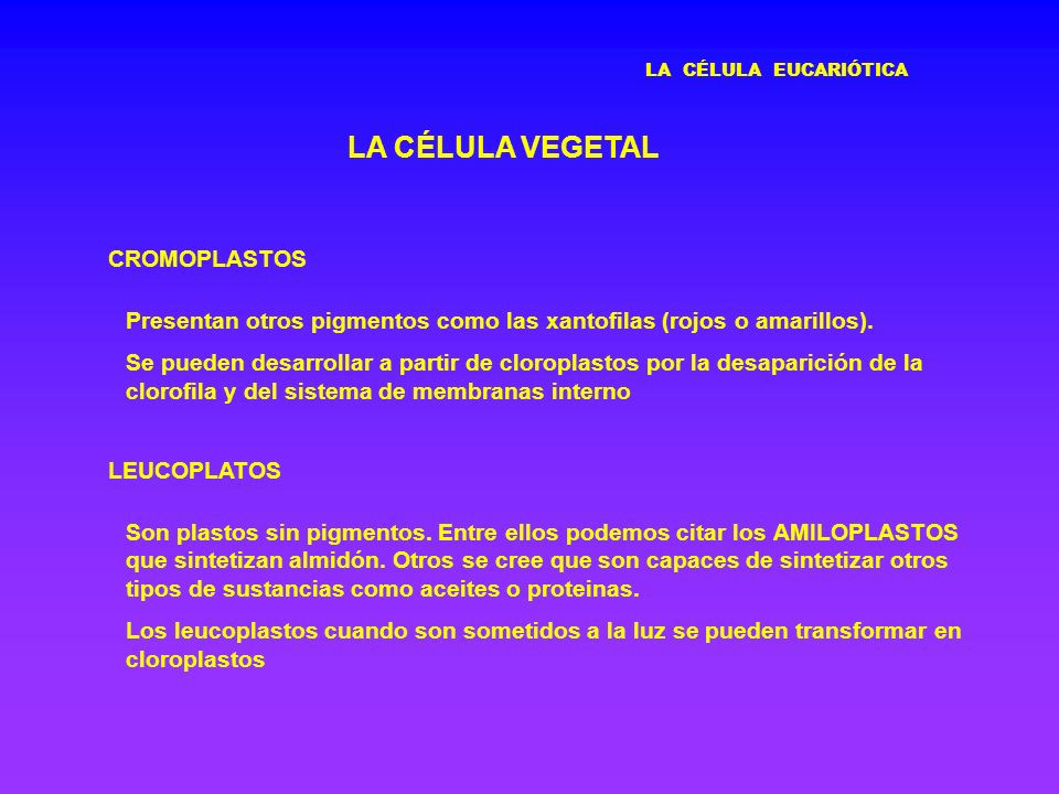LA CÉLULA VEGETAL CROMOPLASTOS