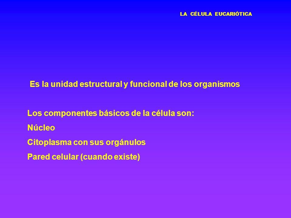 Es la unidad estructural y funcional de los organismos